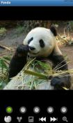 Скриншот к файлу: Funny Panda : Wild Animals