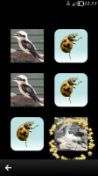 Скриншот к файлу: Animal Fun - v.1.85(0) ENG